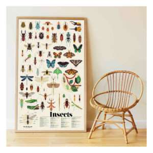 Poster stickers Les Insectes – Poppik